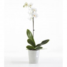 Circular & Co Eco Recycled Orchid Pot Morinda